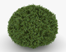 3D model of Shrub