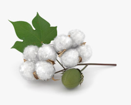 3D model of Cotton