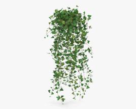 3D model of Ivy