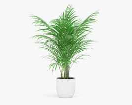 3D model of Areca Palm