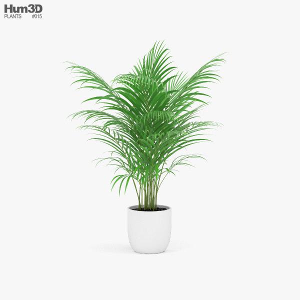 Areca Palm 3D model