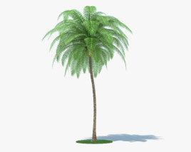 3D model of Coconut Palm