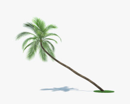 3D model of Coconut Palm 002