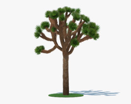 3D model of Joshua Tree