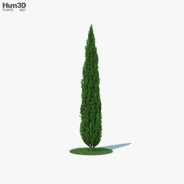 Cypress 3D model