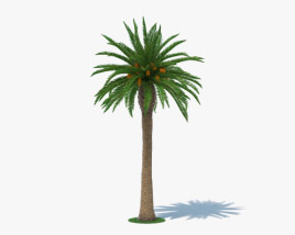 3D model of Date Palm
