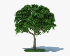 3D model of Mango Tree