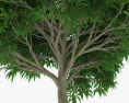 Mango Tree 3d model
