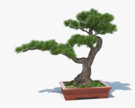 3D model of Bonsai Tree