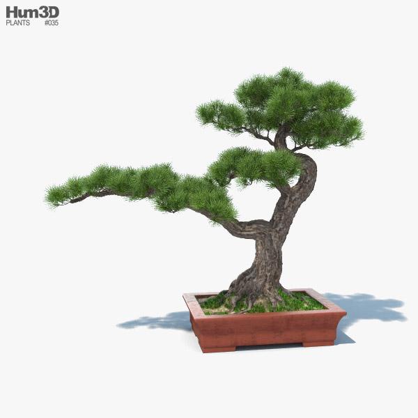 Árbol bonsai Modelo 3D
