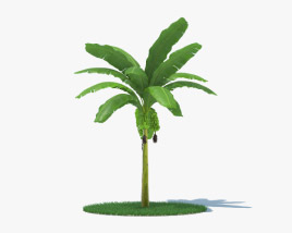 3D model of Banana Palm Tree 002