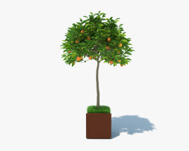3D model of Orange Tree in a Pot