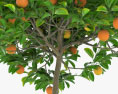 Orange Tree in a Pot 3d model