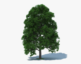 3D model of White Oak Tree