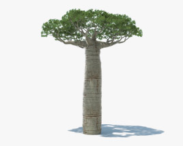3D model of Baobab Tree