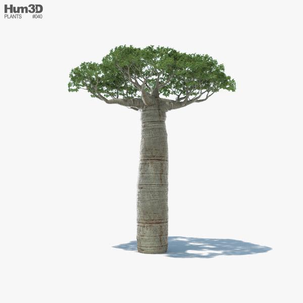 Baobab Tree 3D model