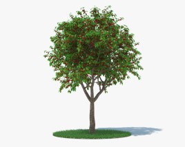 3D model of Cherry Tree