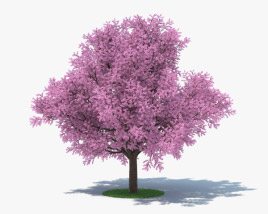 3D model of Sakura Tree