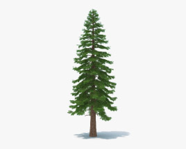 3D model of Redwood Tree
