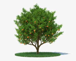 3D model of Orange Tree
