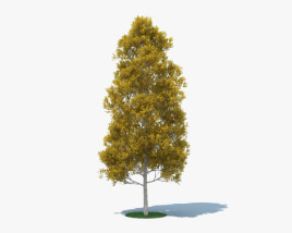 3D model of Quaking Aspen