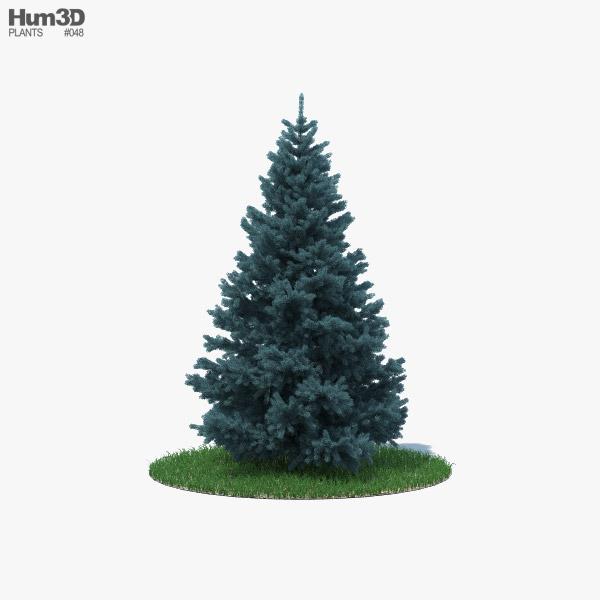 3D model of Blue Spruce