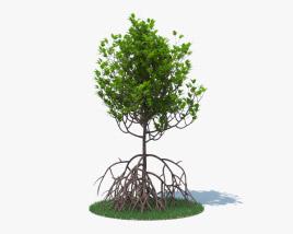 3D model of Mangrove