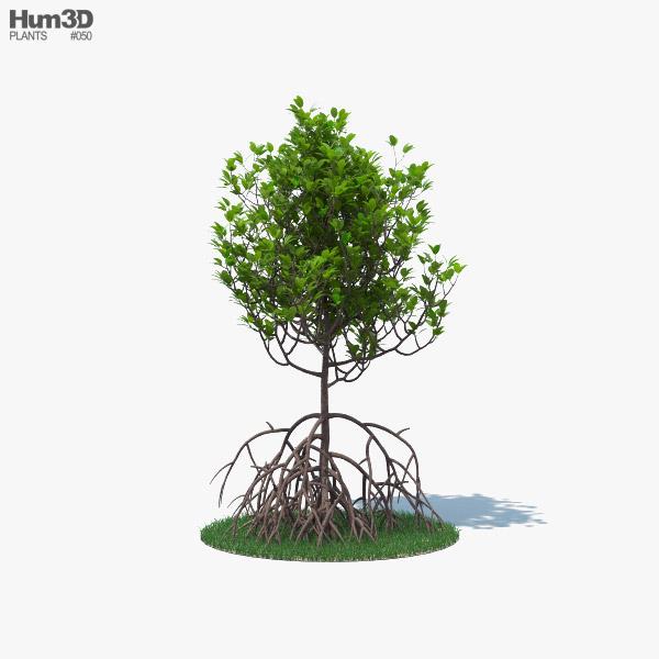Manglar Modelo 3D