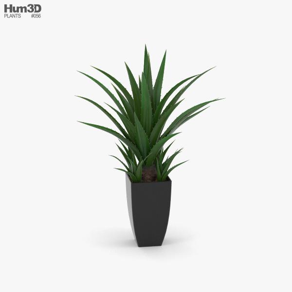 Agave In Decorative Pot 3D model
