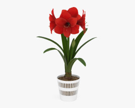 3D model of Amaryllis