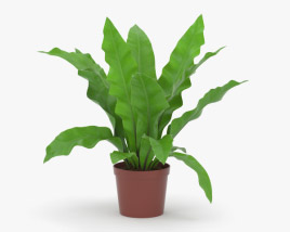 3D model of Asplenium