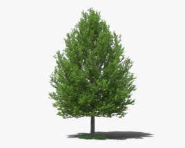 3D model of Linden Tree