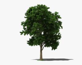 3D model of Ash Tree