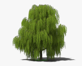 3D model of Willow Tree