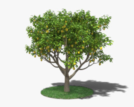 3D model of Lemon Tree