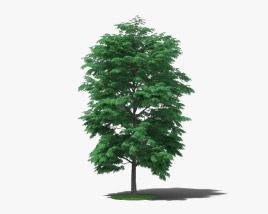 3D model of Pecan Tree