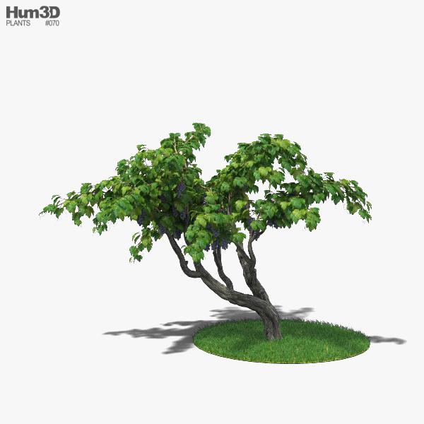 Vineyard 3D model