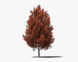 3D model of Sweetgum
