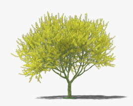 3D model of Blue Palo Verde