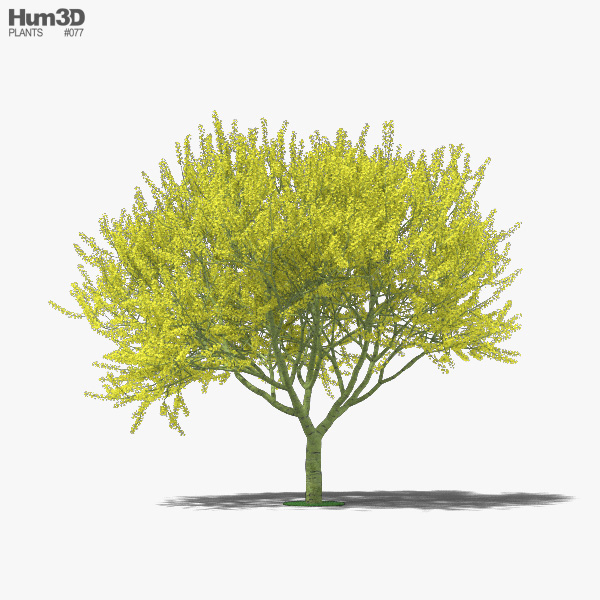 Blue Palo Verde 3D model