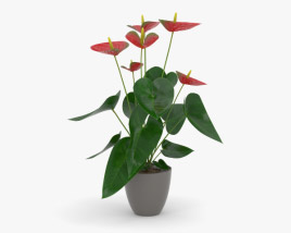 3D model of Anthurium Andraeanum
