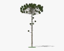 3D model of Araucaria