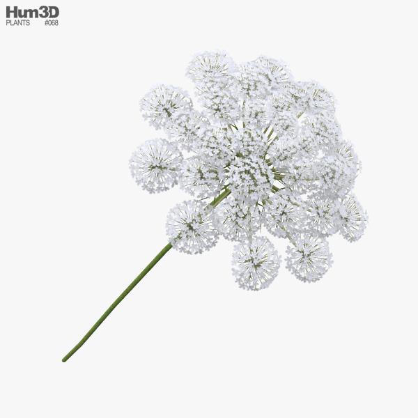 Wild Carrot Flowers 3D model