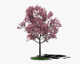 3D model of Tabebuia Rosea