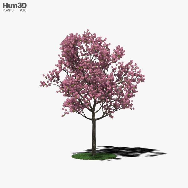 Pink poui 3D model