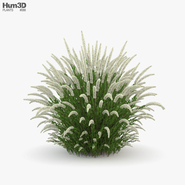 3D model of Spiraea Cinerea Grefsheim