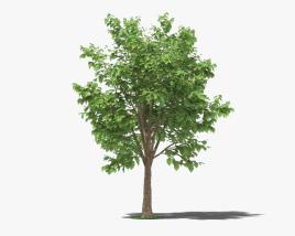3D model of Teak Tree