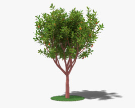 3D model of Strawberry Tree