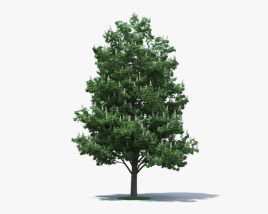 3D model of Horse Chestnut