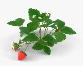3D model of Strawberry Plant
